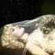 Marilyn Monroe Prepared for Funeral
