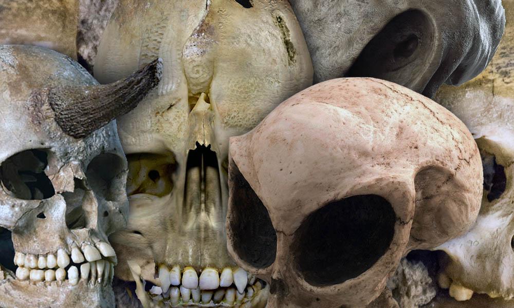 Weird Skulls
